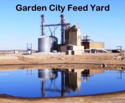 Garden City Feed Yard 1-800-999-5065